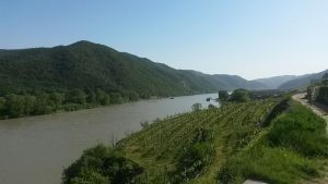 Radweg, Donau, Weinberge und Sonnenschein