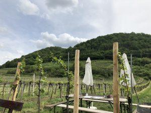 Heuriger Weingarten Pulkers bei Rossatz