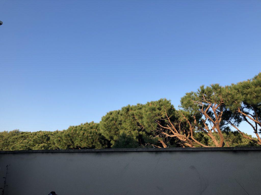 Ich LIEBE meine Dachterrasse!!